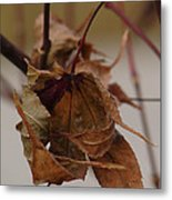Touched By Jack Frost Metal Print