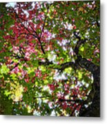 Touches Of Autumn  Metal Print
