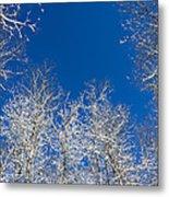 Touching The Winter Sky Metal Print
