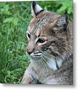 Tough Cat Metal Print