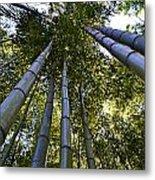 Towering Bamboo Metal Print
