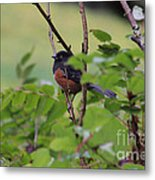 Towhee Keeps Watch On High Metal Print by Kym Backland
