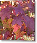 Traces Of Fall Metal Print
