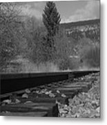 Tracks And Trees Metal Print