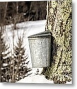 Traditional Sap Bucket On Maple Tree In Vermont Metal Print