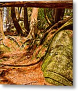 Trail In A Forest, Muskoka, Ontario Metal Print