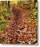 Trail In Fall Forest Metal Print