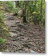 Trail Of Roots Metal Print