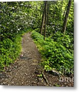 Trail To Chimney Tops - D005669a Metal Print