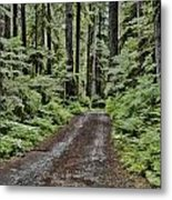 Trail To Jaw Bone Flats Metal Print