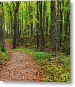 Trail To Miners Falls Metal Print