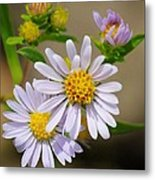 Trail Wildflowers Metal Print