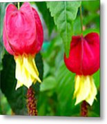 Trailing Abutilon Or Lantern  Flower Metal Print