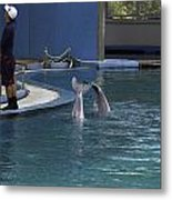 Trainer And 2 Dolphins At The Underwater World In Sentosa Metal Print
