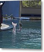 Trainer And The Tails Of A Duo Of Dolphins At The Underwater World Metal Print