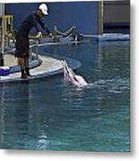 Trainer Feeding Duo Of Dolphins At The Underwater World In Sentosa Metal Print