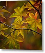 Tranquil Collage Metal Print