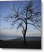 Tranquil Metal Print by Terry DeLuco