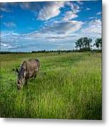 Tranquility On The Plains Metal Print
