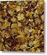 Transition Of Autumn Metal Print