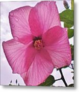 Translucent Flower After The Rain Metal Print