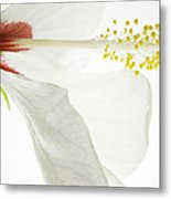 Transparent Hibiscus Metal Print