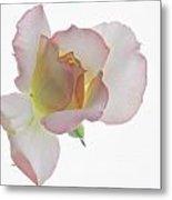 Transparent Rose 2 Metal Print