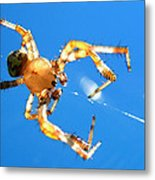 Trapeze Spider Metal Print by Christina Rollo