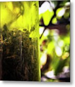 Trapped And Dead Bees Metal Print