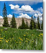 Trappers Lake Meadow Metal Print