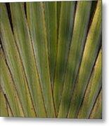 Traveller's Palm Patterns Dthb1542 Metal Print
