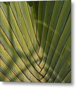 Traveller's Palm Patterns Dthb1543 Metal Print