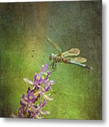 Treading Lightly Metal Print