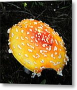 Treasures Of The Forest Two Metal Print