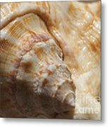 Treasures Of The Ocean 2 Metal Print