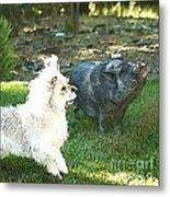 Treats For Woody And Schnitzel Metal Print by Artist and Photographer Laura Wrede