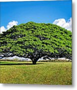 Tree 10 Metal Print