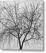 Tree Abstract In Black And White Metal Print
