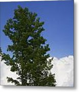 Tree Against A Cloudy Blue Sky In Vermont Metal Print