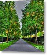 Tree Alley Metal Print