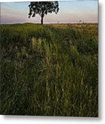 Tree Alone Metal Print