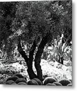 Tree And Cactus Metal Print