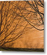 Tree And Shadow At Cogswells Grant Metal Print