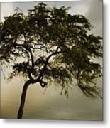Tree And Stormy Sky Metal Print