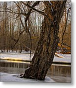 Tree At Collins Creek 2 Metal Print