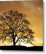 Tree At Golden Sunrise Metal Print