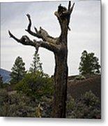 Tree At Lava Trail Metal Print
