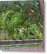 Tree At Norfolk Botanical Garden 4 Metal Print