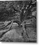 tree at Normanby Park Metal Print