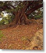 Tree At Royal Botanic Garden Metal Print